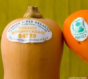 organic-fall-produce-stickers-1