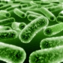 bacteria 2(1)