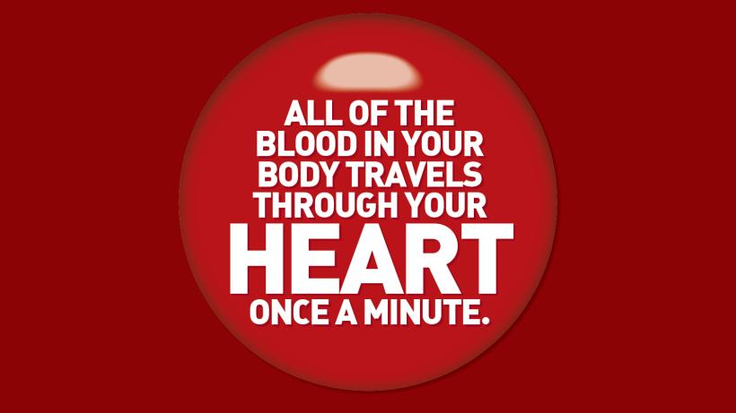 heart-blood