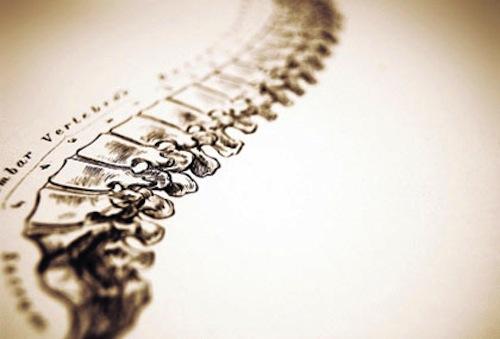 chiro-spine1